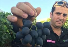 澳洲进口葡萄案例分享